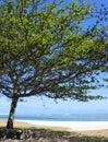 Shade under Tree Royalty Free Stock Photo