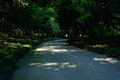 Shaded curving road in woods of sunny summer afternoon Royalty Free Stock Photo