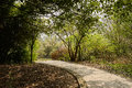 Shaded footway in woods of sunny spring Royalty Free Stock Photo