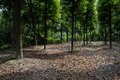 Shaded ground with fallen leaves in summer woods the the on sunny day chengdu china Royalty Free Stock Image