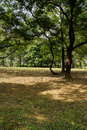 Shaded ground in woods on sunny day Royalty Free Stock Images