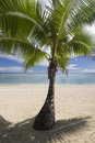 Shaded palm tree on tropical sandy beach aitutaki by lagoon Royalty Free Stock Photography