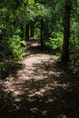 Shaded path in the woods Royalty Free Stock Photo