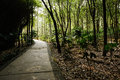 Shaded path in woods of sunny spirng footpath the spring chengdu china Royalty Free Stock Images