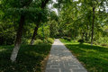 Shaded path in woods on sunny summer day Royalty Free Stock Photo