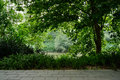 Shaded path in woods of sunny summer Royalty Free Stock Photo