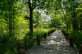 Shaded planked path in woods of sunny summer Royalty Free Stock Photo