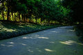 Shaded road in woods of sunny summer afternoon Royalty Free Stock Photo