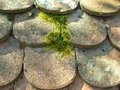 Shaded roof of ancient potsherd the under moss Stock Images
