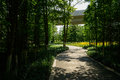 Shaded way in woods under railway bridge on sunny summer day Royalty Free Stock Photo