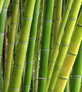 Shades of bamboo diverse hard asian trees in a botanical jungle Royalty Free Stock Photography