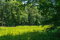 Shades of green summer greens in this meadow at sourland mountain preserve in somerset county new jersey Royalty Free Stock Photography