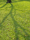 Shadow spread of tree on lawn in daytime Stock Image
