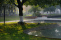 Shadow of tree in foggy morning umbrage a by the pool winter at chengdu china Royalty Free Stock Image