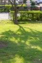 Shadow tree Royalty Free Stock Photo