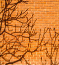 Shadow of a tree on wall Royalty Free Stock Photos