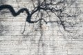 Shadows of the bent boughs on a wall Royalty Free Stock Photo