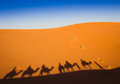Shadows camel caravan on the desert sand Royalty Free Stock Photo