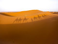 Shadows of camels in desert Royalty Free Stock Photo