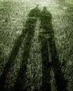 Shadows on Green Grass Royalty Free Stock Photo