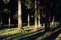 Shadows from the trees in the forest. Royalty Free Stock Photo