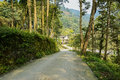 Shady countryroad to village in sunny winter leading a dujiangyan china Stock Image