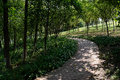 Shady curving pavement on hillside in sunny summer the Royalty Free Stock Photo