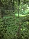 Shady forest grove. Stock Photos