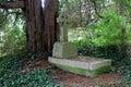 Shady grave stone Royalty Free Stock Photo