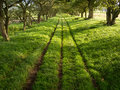 Shady Green Lane Track with Trees Royalty Free Stock Photo