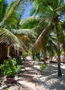 Shady guesthouse yard in mui ne vietnam with palms Stock Photos
