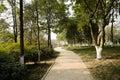 Shady path on sunny day chengdu china Stock Photos