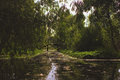 Shady river with willows on the banks Royalty Free Stock Photo