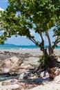 Shady swing under tree corner with big on the beach Stock Photos