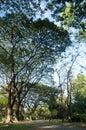 Shady tree in the park Stock Photos