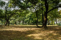 Shady woods in sunny morning chengdu china Royalty Free Stock Images