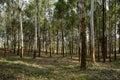Shady woods in sunny spring chengdu china Stock Image