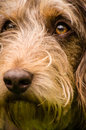 Shaggy dog a close up photograph of a Royalty Free Stock Images