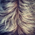 Shaggy Dog Fur Texture Stock Image