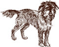 Shaggy dog vector image of a street doggie Stock Photo