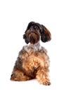 Shaggy doggie Stock Photography