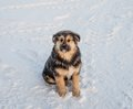Shaggy haired dog sitting on blue snow Royalty Free Stock Photo