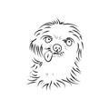 Shaggy puppy on white background