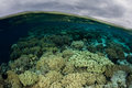 Shallow Coral Reef and Clouds in Indonesia Royalty Free Stock Photo