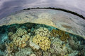 Shallow Coral Reef in Indonesia Royalty Free Stock Photo