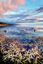 Shallow coral reef sunset Royalty Free Stock Photo