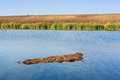 Shallow lake water in summer daylight Stock Images