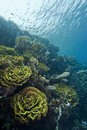 Shallow underwater reefscape. Stock Photos