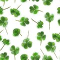 Shamrock Seamless Pattern Isolated on White Background. St. Patrick`s Day Design for Background, Print, and Textile.