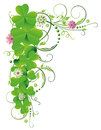 Shamrocks clover tendril colorful realistic green Royalty Free Stock Photos